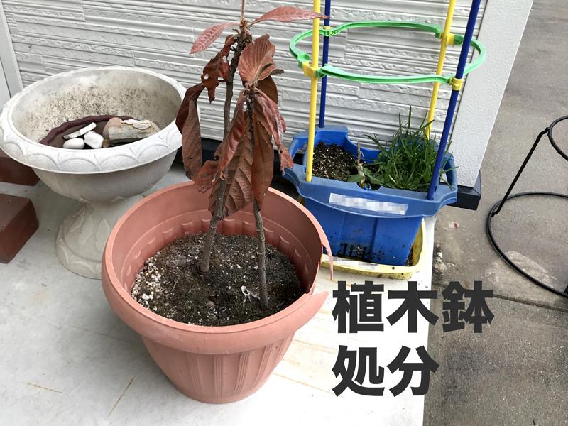 枯れた植木鉢