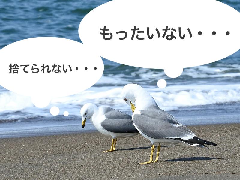 悩む鳥たち